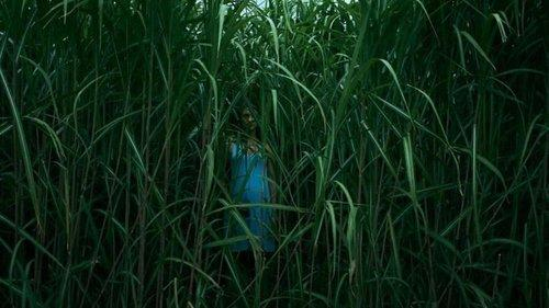 Image of In the Tall Grass