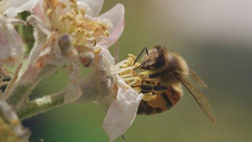 Image of A Bee's Diary